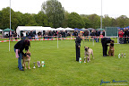 20100513-Bullmastiff-Clubmatch_31123.jpg