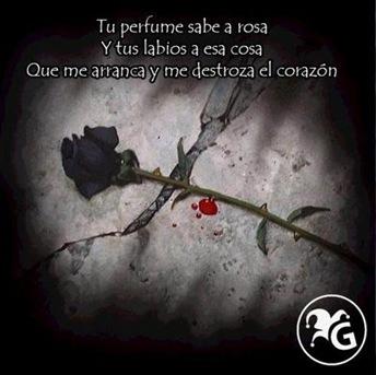 FloresNegras-CqdM-0709