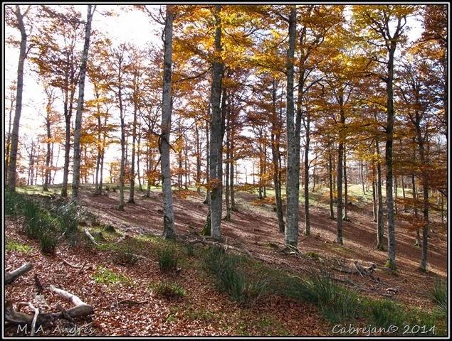 Lantz otoño 066