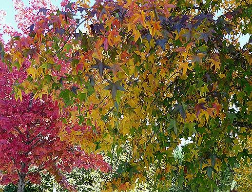 Gloria Ishizaka - Outono -  folhas 8