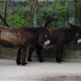 Heidelberger-Zoo (14 von 49).jpg