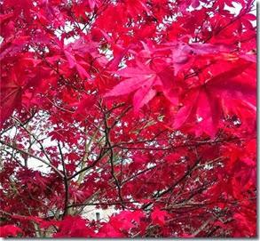 Outono, Bracknell 2012 Autora Vivi Mont