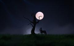 Solitude Horse Night-243554
