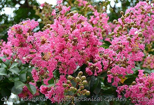 Glória Ishizaka -   Kyoto Botanical Garden 2012 - 37