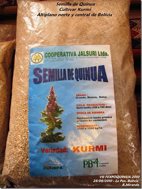 Semillas de Quinua del cultivar Kurmi - Rubén Miranda - Laquinua.blogspot.com