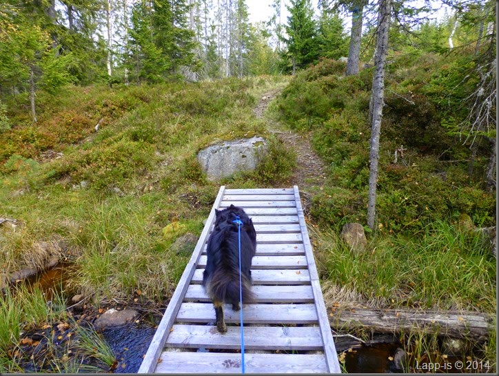 Råsjøen 035