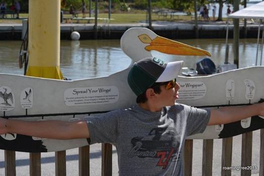 Bryce's wingspan - brown pelican