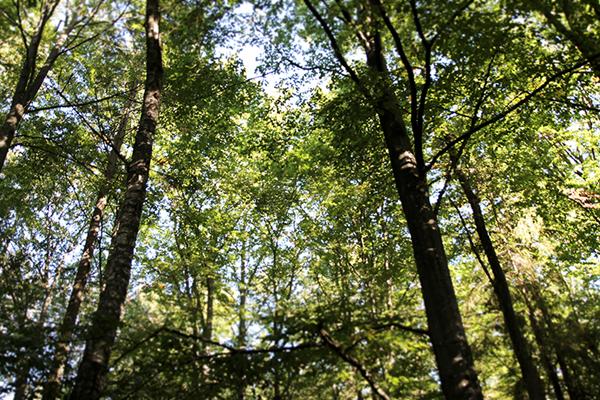 tillSkogs1