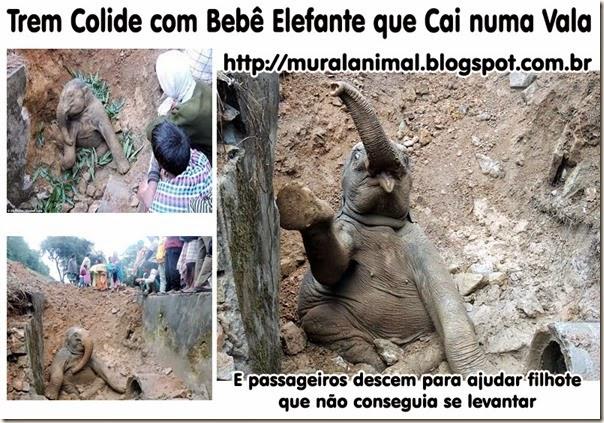 Elefante-bebe-1