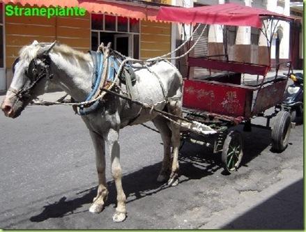 coche de caballo carretto cavallo cuba