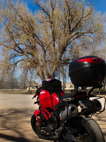 Ducati and Cottonwood Tree