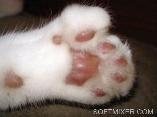 hemingway_cat-300x229