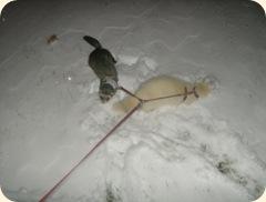 ferret life 002