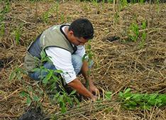 Reflorestamento-mangue_ONGGuardioesdoMar
