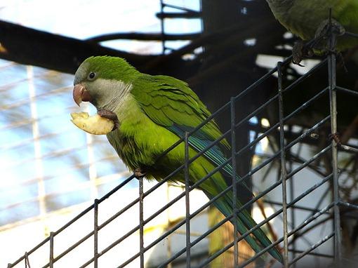 Попугай в Ботаническом саду в Бирмингеме