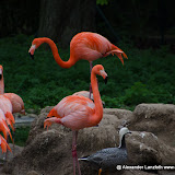 Heidelberger-Zoo (31 von 49).jpg