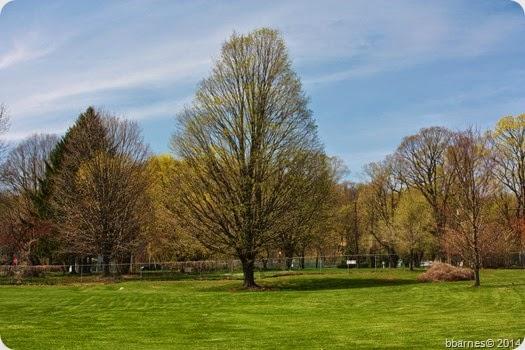 April 28 front yard