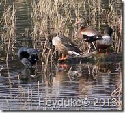 Llano Estero State Park 091