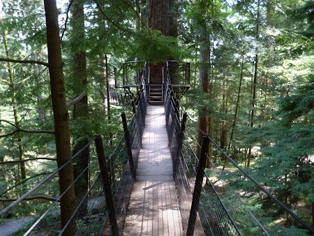Tree tops adventure