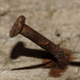 Rusted Nail by Andreas Müller - Abstract Macro ( macro, nail, rust, close up, makro, closeup, decay )
