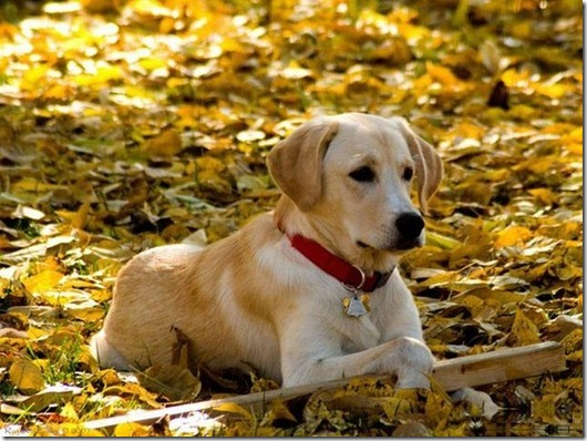 dogs_038