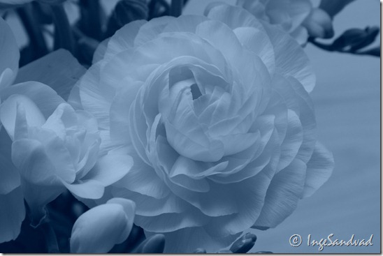 Hvid blomst - cool