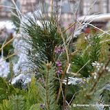 Colmar_2012-12-28_4112.JPG