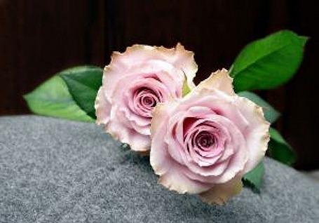 duas-rosas-rosa_2830037