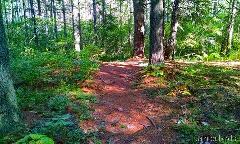 17. pine path 9-7-14