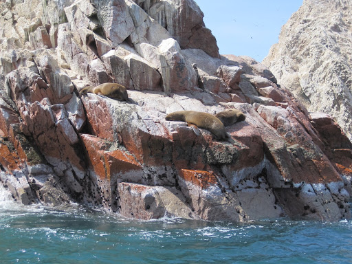 Sea Lions napping in the sun