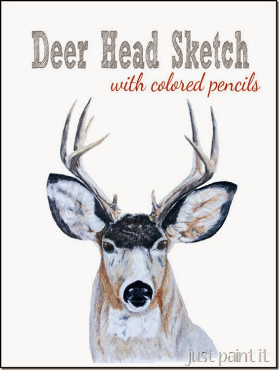deer head sketch