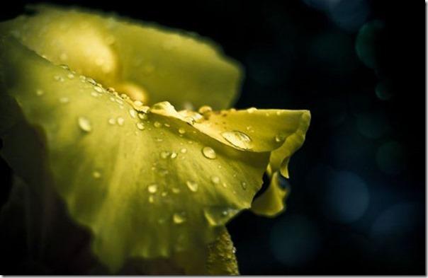 Lindas fotos da chuva (19)