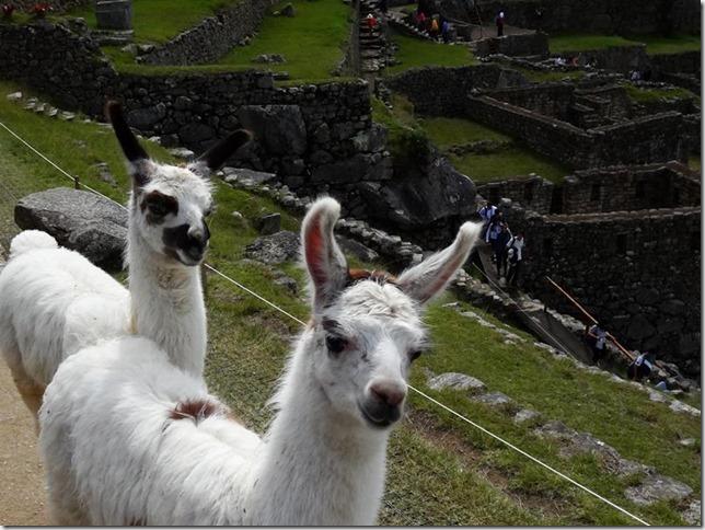 Machu_Picchu_DSC02187