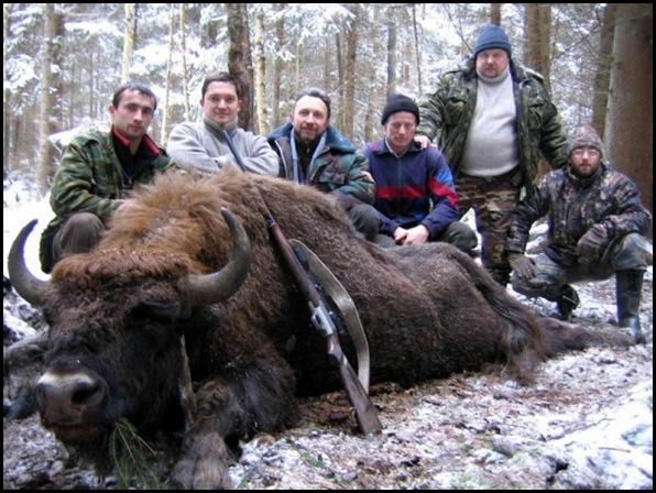 Le massacre des bisons en Amérique-8