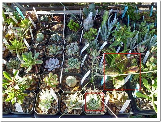120822_DavisAce_succulents_07