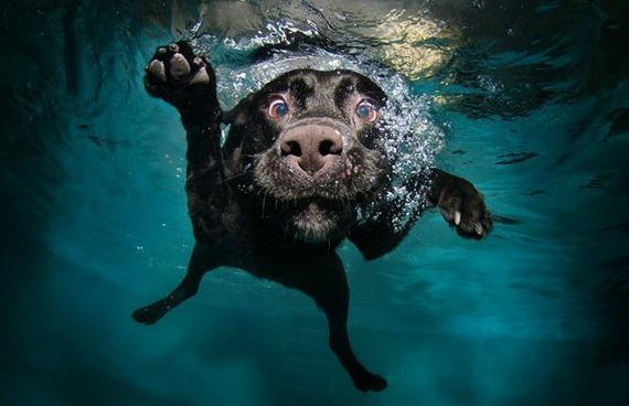 Underwater Dog 08