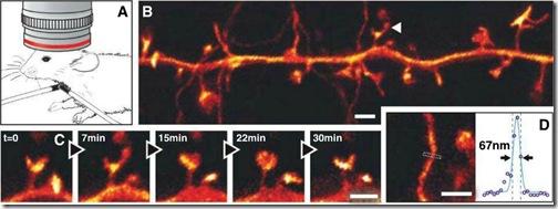 nanoscopy