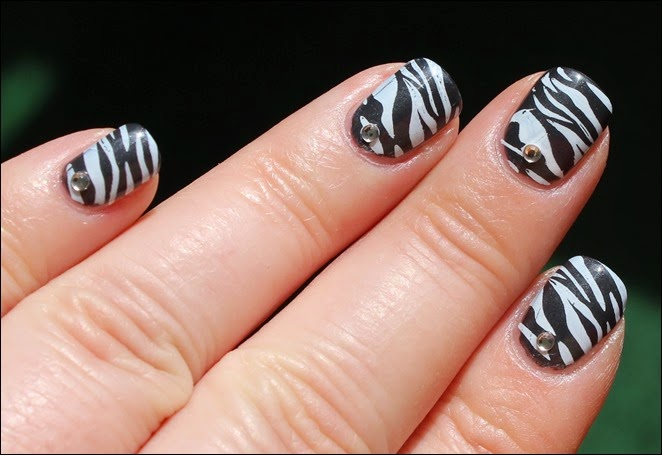 Safari Zebra 07