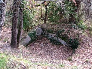 A woodsy walk 20
