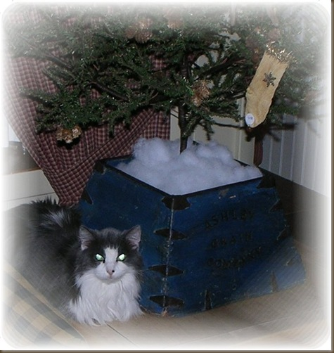 lola by tree