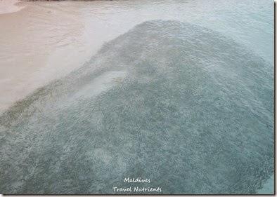 馬爾地夫 Centara渡假村 (52)