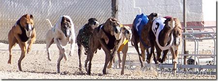 2011-12-06 bonita springs florida 058