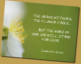 flower_8384cp