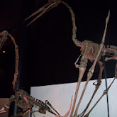 Houston Museum of Natural Science - 116_2656.JPG