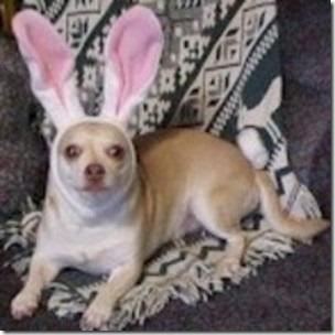 perros pascua (5)