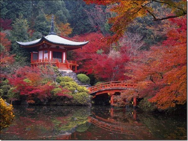 Lindas imagens de folhas do outono (30)