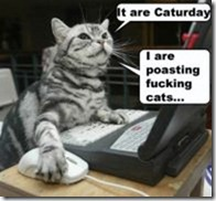 caturday