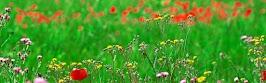 flower panoram_nebesnoe.info_07.jpg