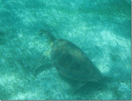 Tobago Cays 038