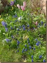 garden march 012